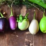 Different varieties of eggplants found in Kong Redian's kitchen garden.