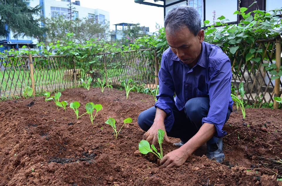 New batch of plants were planted in the NESFAS Community garden on the 24th September. (Bah Arms, NESFAS's official gardener putting his green thumbs to work.)